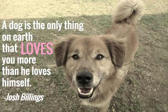 Image result for Great Quotes About Dogs