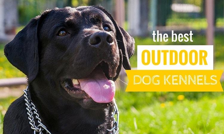 Best Outdoor Dog Kennel