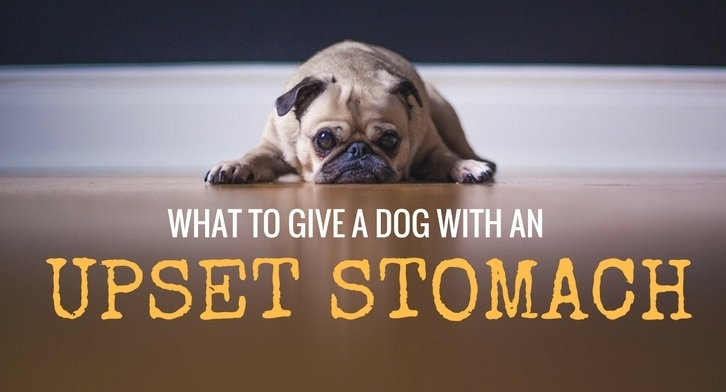 Food To Give Dogs With Upset Stomachs